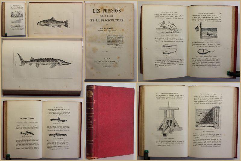 Gauckler Les Poissons 1881 Süßwasserfische & ihr Zucht/Haltung Ichthyologie sf