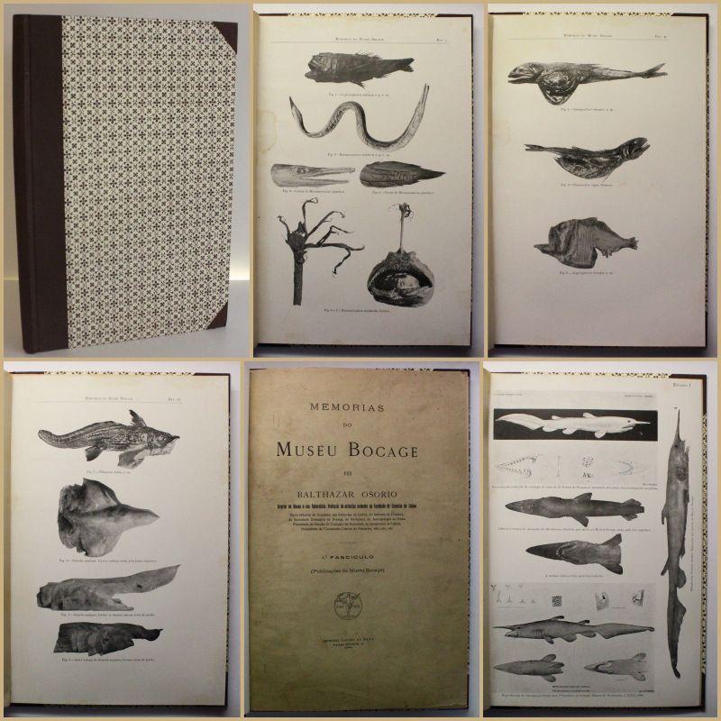 Osorio Contribuicao para o conhecimento da Fauna 1909 Ichtyologie Fischkunde xy