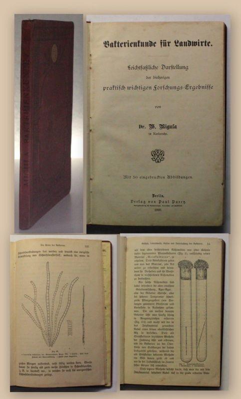 Migula Bakterienkunde für Landwirte 1890 Fachbuch Landwirtschaft Biologie xy