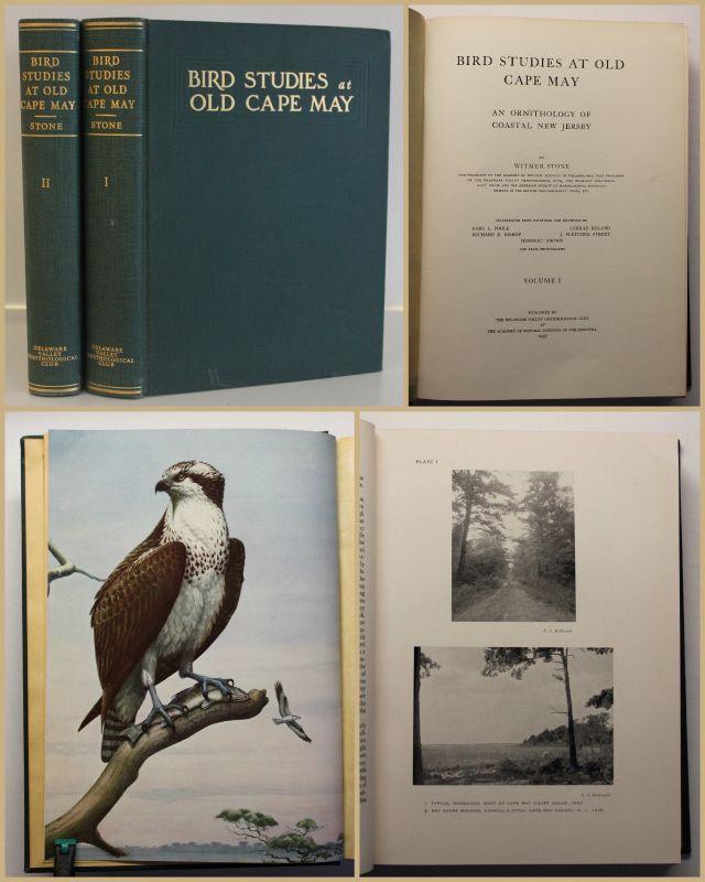 Stone Bird studies at old cape may 1937 2 Bde Ornithologie Vogelkunde  sf