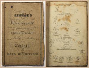 Hummitzsch Linnee's Pflanzensystem Botanik 6 Kupfertafeln um 1850 Pflanzenkunde