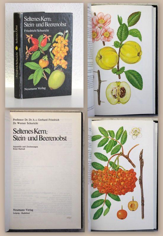 Friedrich Kern-, Stein- und Beerenobst 1985 Botanik Gartenbau Pomologie xz