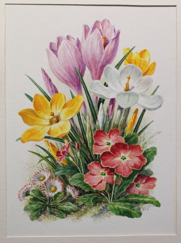 Wilhelm Pech Aquarell Frühlingsblumen Frühblüher 1960 Grafik Malerei Krokus xz