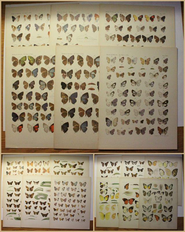 19 Tafeln lithografiert Piepus/ Snellen  The Rhopalocera of Java um 1920 xy