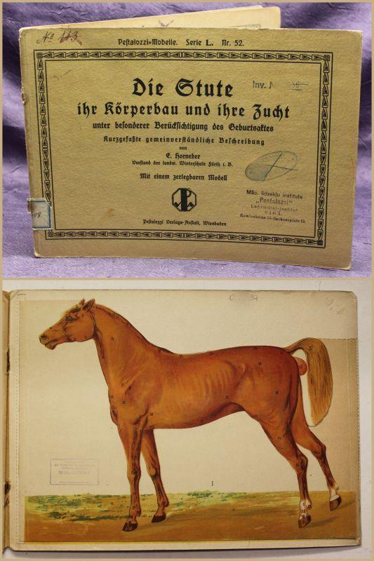 Horneber Die Stute ihr Körperbau und ihre Zucht o.J. Zoologie Tier Pferd sf