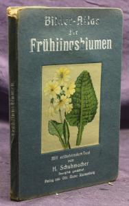 Schuhmacher Bilder-Atlas der Frühlingsblumen um 1900 Natur Leporello Botanik sf