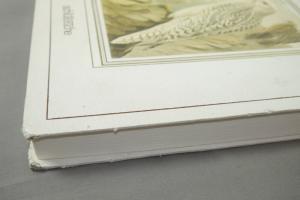 Greifvögel 1980 Original-Lithographien 19.Jh. aus 64 Tafeln Eulen Falken ua (F6)