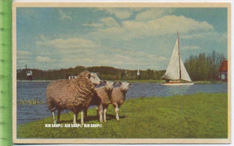 """""""Schafe"""" um 1950/1960 ungebrauchte Karte"""