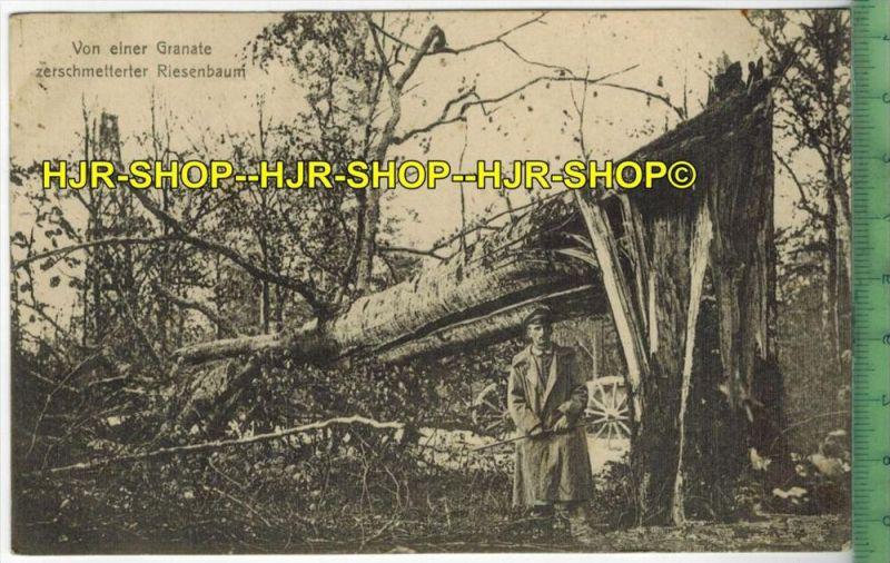 Von einer Granate zerschmetterter Riesenbaum, 1916 Verlag: F. Conrad, Metz, FELD-POSTKARTE-ohne Frankatur, mit  Stempel,