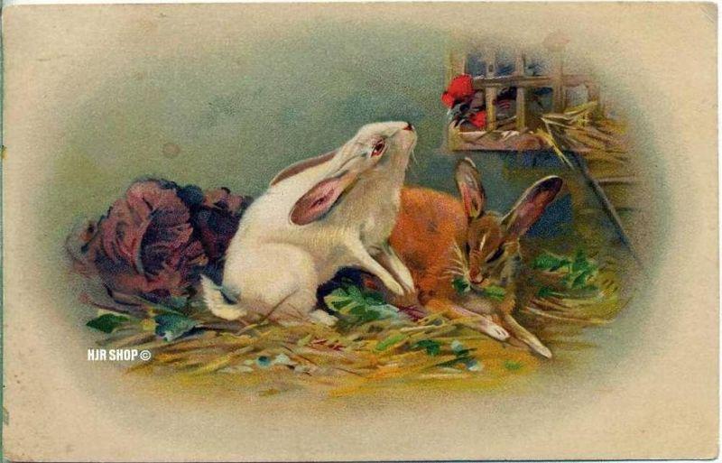 Postkarte, Kaninchen