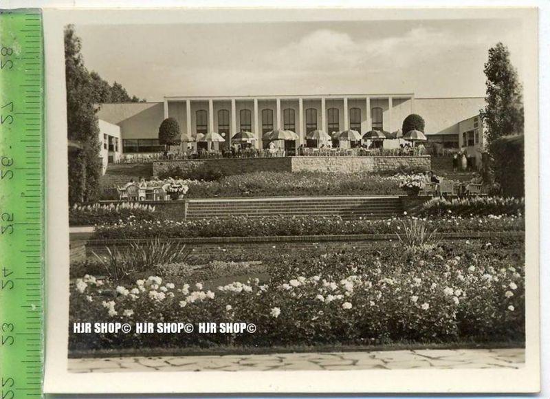 Essen, Grugapark, ca. 1930/1940,  Sammelfoto 9,2 x 7 cm,  Rosenanlage mit Rosenkaffee