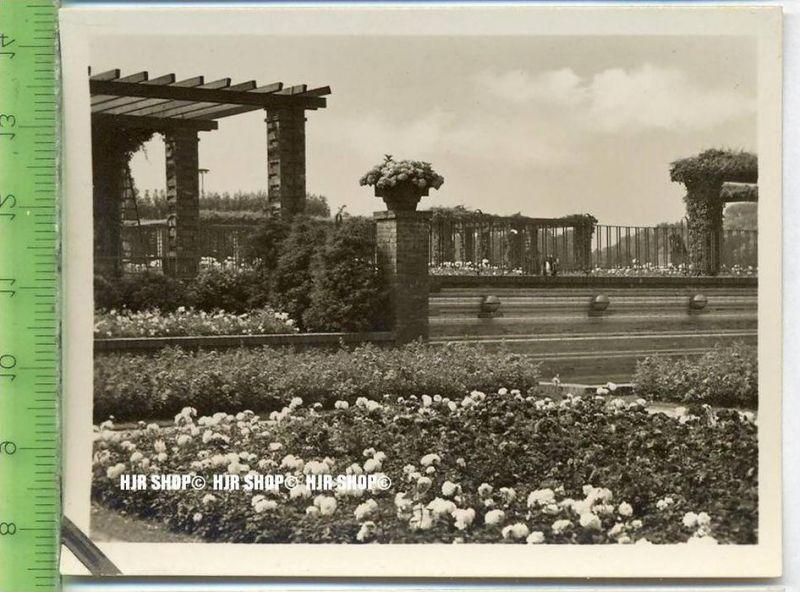 Essen, Grugapark, ca. 1930/1940,  Sammelfoto 9,2 x 7 cm,  Speierwand