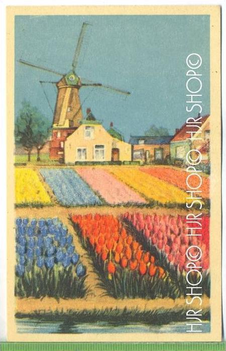 Blumenfeld Verlag:  ---, POSTKARTE ,  unbenutzte Karte ,  Erhaltung: I-II Karte wird in Klarsichthülle verschickt. (H)