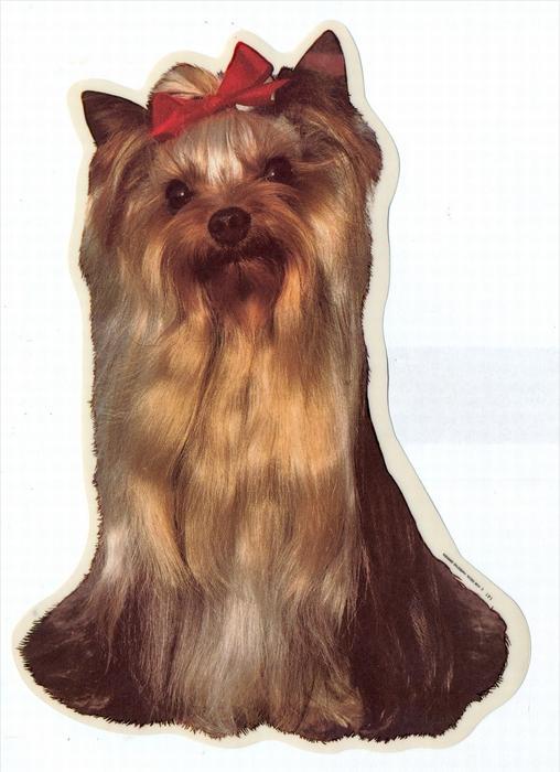 2 Hunde – Aufkleber YORSHIRE TERRIER - links  groß: 14 x 15  cm, l Zustand: Neu