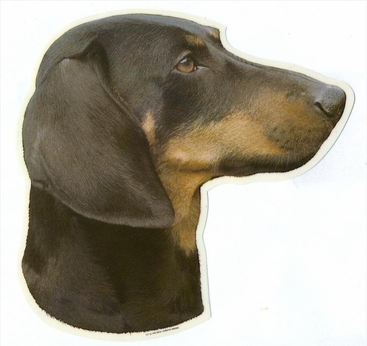 2 Hunde – Aufkleber DACKEL - rechts  groß: 14 x 15  cm,  Zustand: Neu