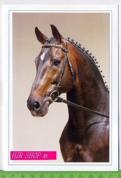 Pferde-Doppelkarte, Flirt Ungel.