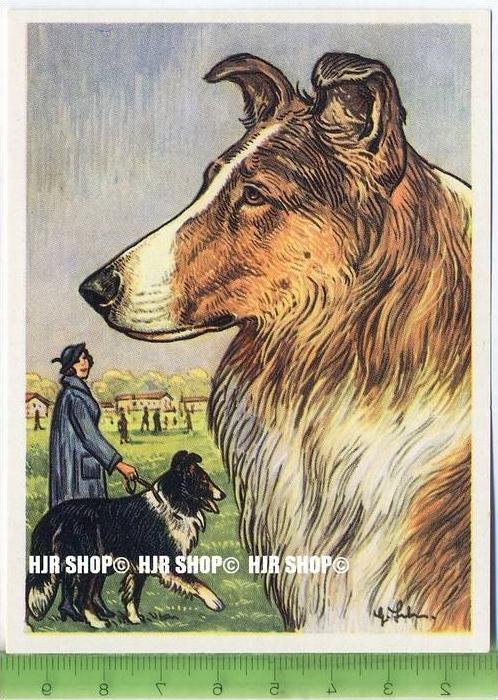 Der schottische Schäferhund oder Collie, c32 Austria-Bildwerk, Kamerad Hund, Serie II: Schäfer und Hirtenhunde.