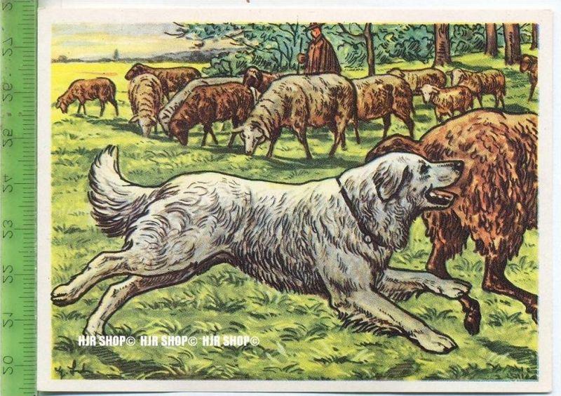 Der Pommersche Hütehund, c 31 Austria-Bildwerk, Kamerad Hund, Serie II: Schäfer und Hirtenhunde.