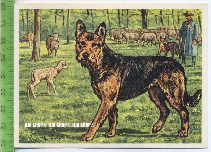 Der rauhaarige Schäferhund aus Württemberg, c 26 Austria-Bildwerk, Kamerad Hund, Serie II: Schäfer und Hirtenhunde.