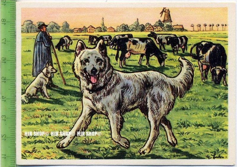 Der Hütespitz, c 30 Austria-Bildwerk, Kamerad Hund, Serie II: Schäfer und Hirtenhunde.