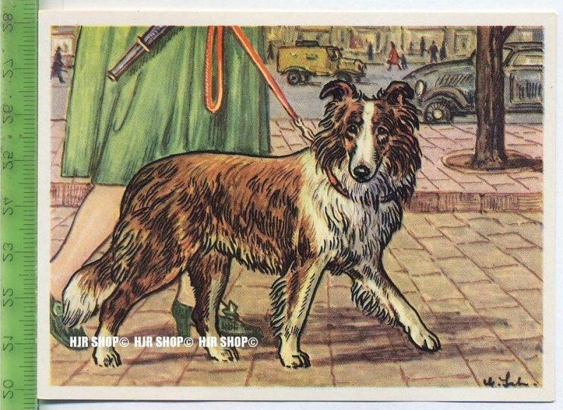 Der Schottische Zwergschäferhund oder Sheltie, c 34 Austria-Bildwerk, Kamerad Hund, Serie II: Schäfer und Hirtenhunde.