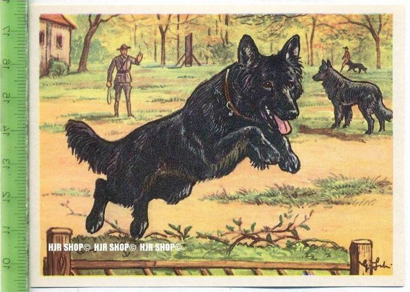 Der Groendaler, c 47 Austria-Bildwerk, Kamerad Hund, Serie II: Schäfer und Hirtenhunde.