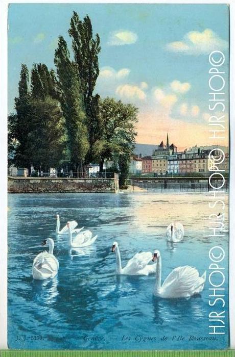 GENEVE – Les Cygnes,  um 1910/20 Verlag: ------, Postkarte,