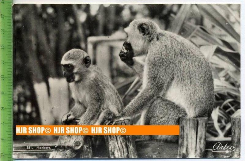 """""""Durban, Monkeys"""",   Ansichtskarte  ungebrauchte Karte"""