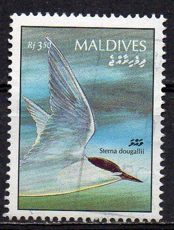 Malediven, Mi-Nr. 1677 gest., Seeschwalbe