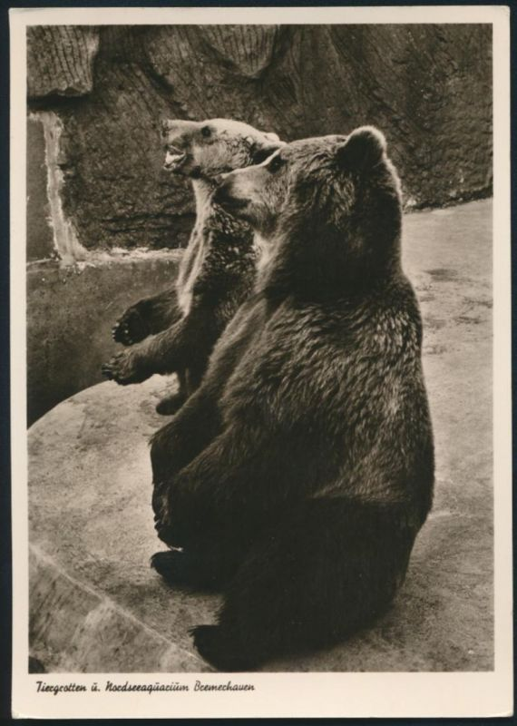 Ansichtskarte Bremerhaven Tiergrotten Nordseeaquarium Tiere Bären Zoo