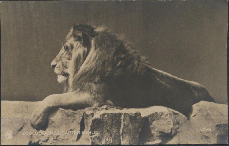 Ansichtskarte Löwen Tiere Raubtiere Zoo Foto Zoologischer Garten Berlin
