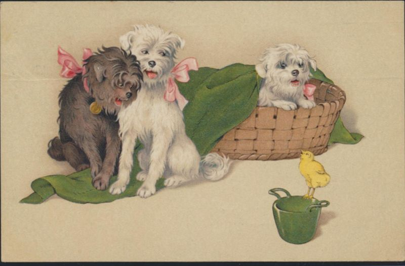 Ansichtskarte Künstler Tiere Hunde Küken 1909