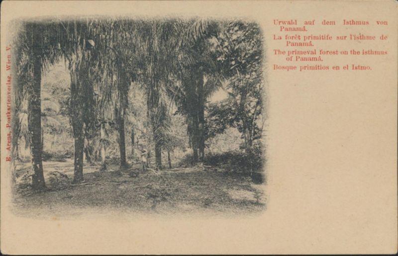 Ansichtskarte Urwald auf dem Istmus von Panama Verlag E. Arens Wien Österreich