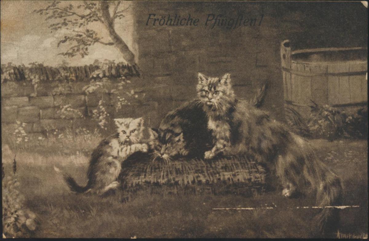 Ansichtskarte Künstler Glückwunsch Pfingsten Tiere Katzen 1913 0