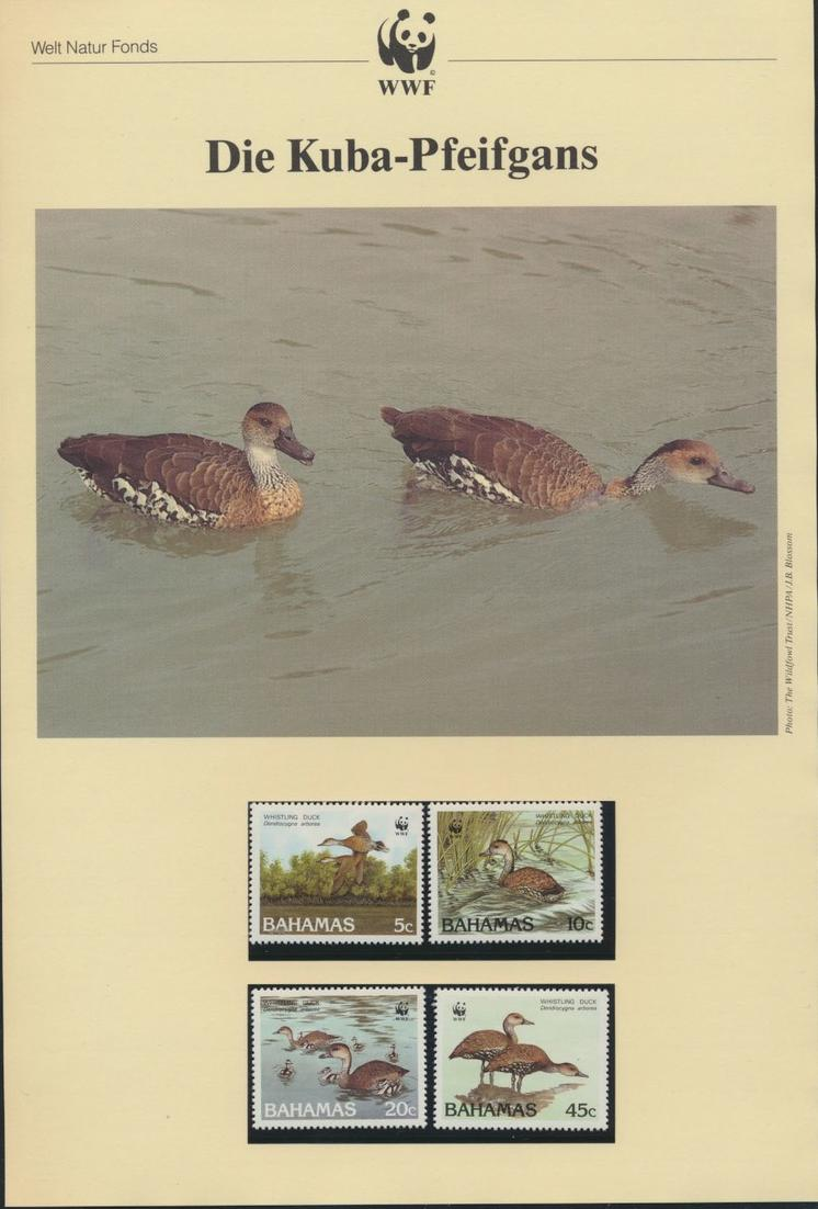 WWF Bahamas 672-675 Tiere Vögel Pfeifgans kpl. Kapitel bestehend 0