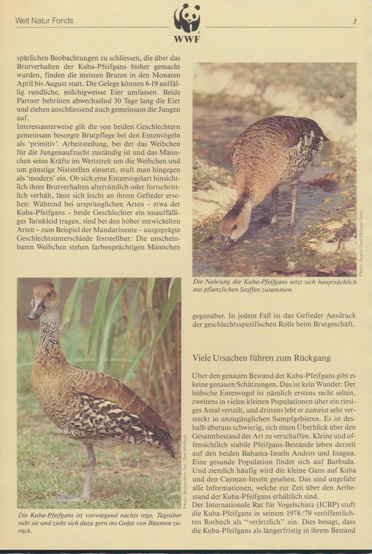 WWF Bahamas 672-675 Tiere Vögel Pfeifgans kpl. Kapitel bestehend 2
