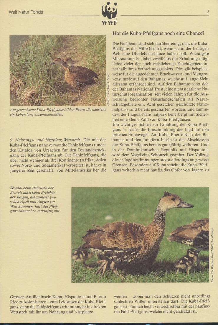 WWF Bahamas 672-675 Tiere Vögel Pfeifgans kpl. Kapitel bestehend 4