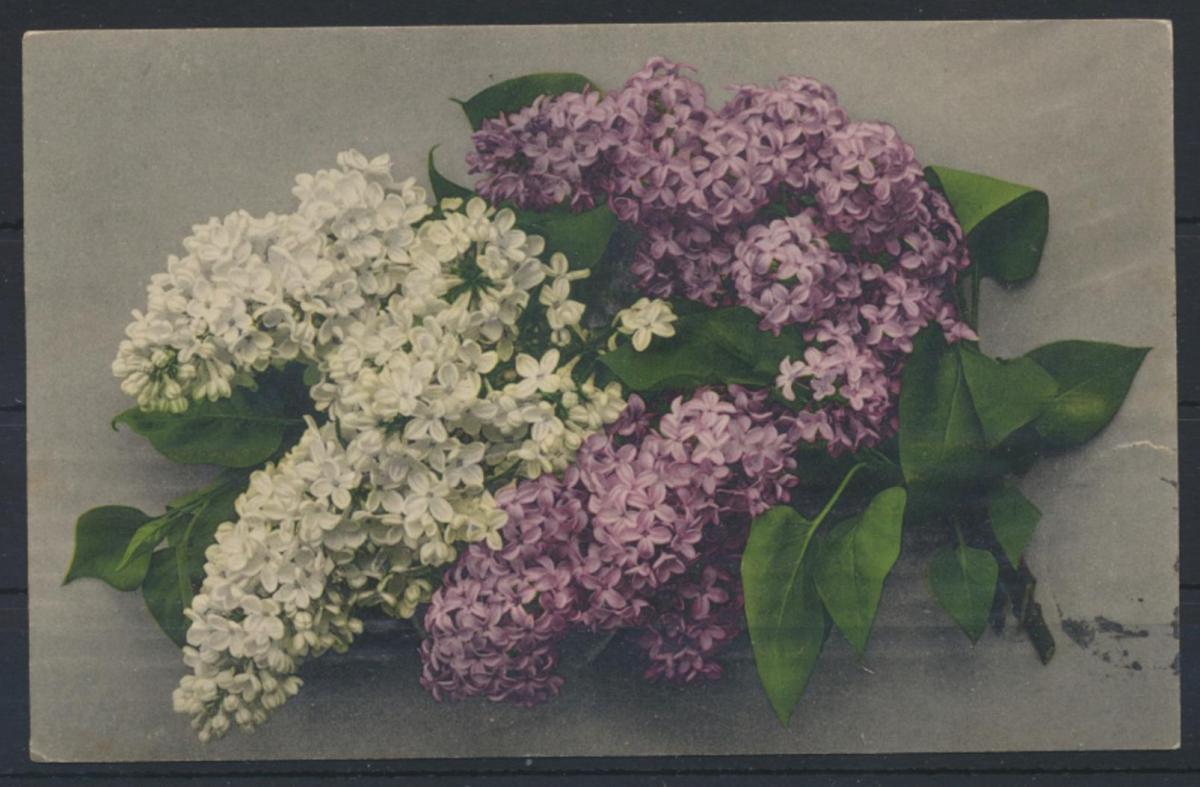 Ansichtskarte Rußland Blumen 1914