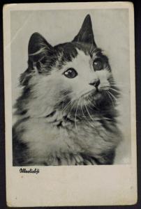 Ansichtskarte Katze Tiere interessante alte Aufnahme ungelaufen