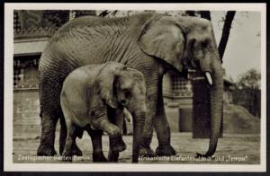 Ansichtskarte Berlin Zoo Tiere Elefant Lindi und Tempo Verlag Aktie-Verein