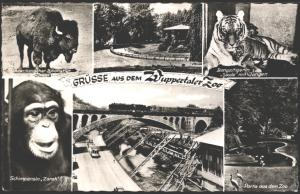 Ansichtskarte Wuppertal Zoo Tiere Tiger Affe