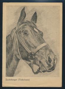 Ansichtskarte Pferde Zuchthengst Trakehnen nach Herford gelaufen 1948