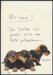 Ansichtskarte mit aufgeklebten Bild von 3 Dackel Hunde Haarlem nach Krefeld 1984