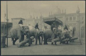 Ansichtskarte Foto Hagenbeck's größte indische Völkerschau Elefanten Baumstamm