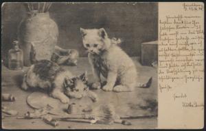 Ansichtskarte Künstler Tiere Katzen als Maler mit Utensilein Kunst 1904