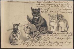 Ansichtskarte Präge Künstler Tiere Katzen Schule ab Leipzig 1904
