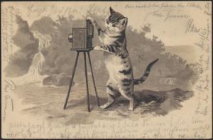 Ansichtskarte Tiere Katzen Foto Fotografie 1901 v. Greifswald n. Hohenbollentin