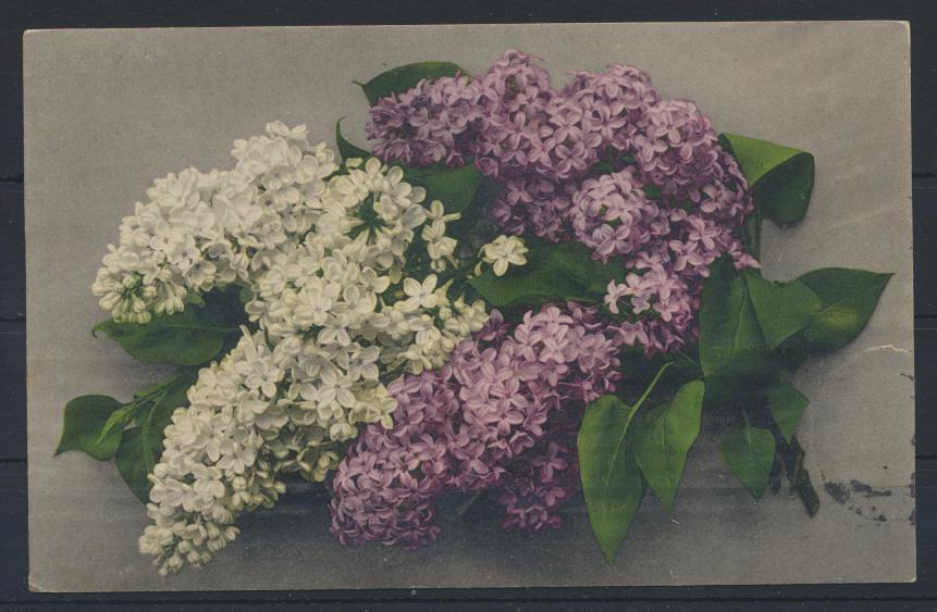 Ansichtskarte Rußland Blumen 1914 0