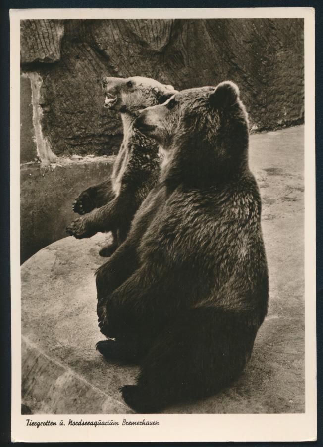 Ansichtskarte Bremerhaven Tiergrotten Nordseeaquarium Tiere Bären Zoo 0
