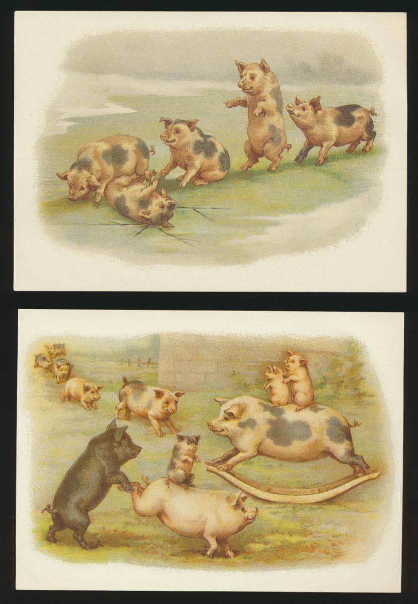 Ansichtskarte Schweine Glücksschweine Tiere eine alte + 4 Reprint um 1900 1